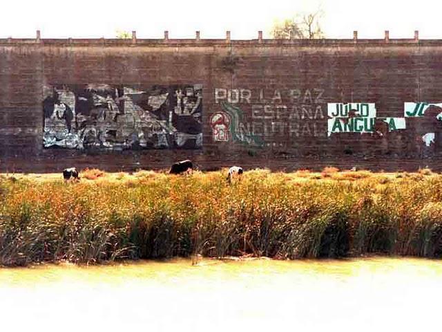 vacas pastando junto a la calahorra